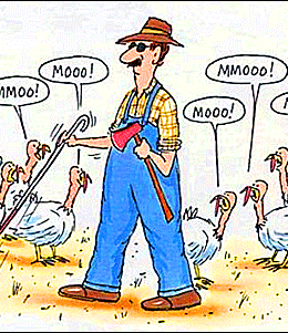 Thanksgiving Cartoon Humor