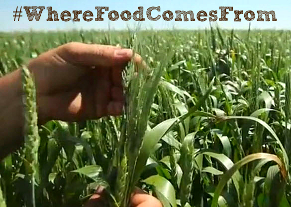 Farmers Feed People #WhereFoodComesFrom Sustainability #Ag