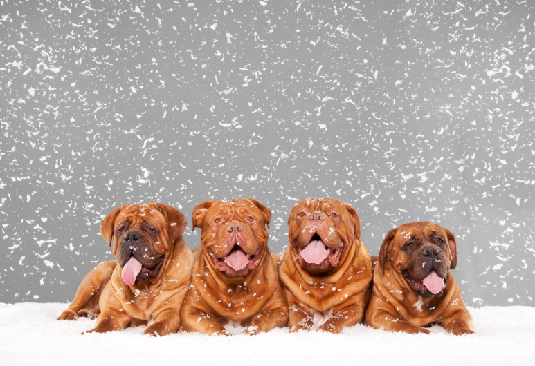 Purina Dressing Dogs for the Holidays
