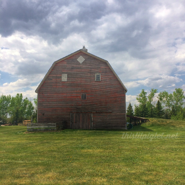 Old Saskatchewan Barn Tour and Racoon Discovery