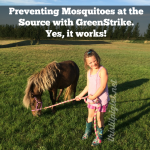 Mosquito Prevention with #GreenStrike. Yes, it works!