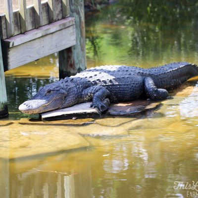 6 Family Friendly Activities in Florida's Gulf Coast