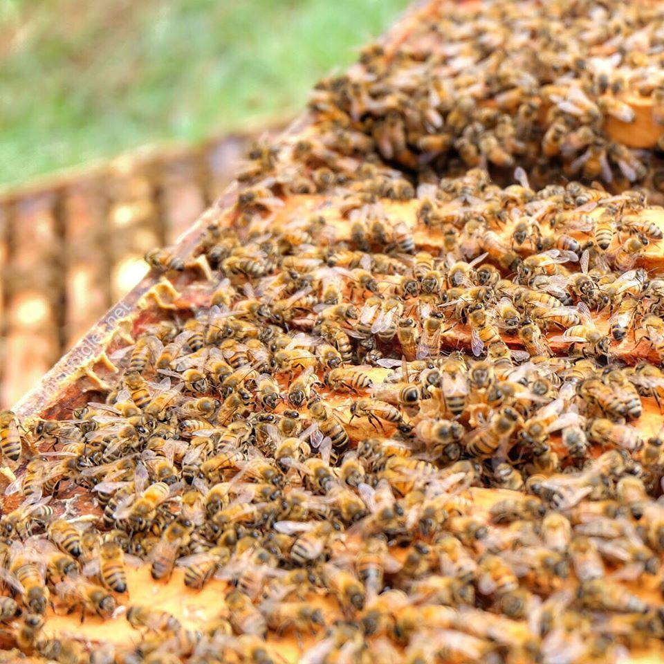 BeesUpClose