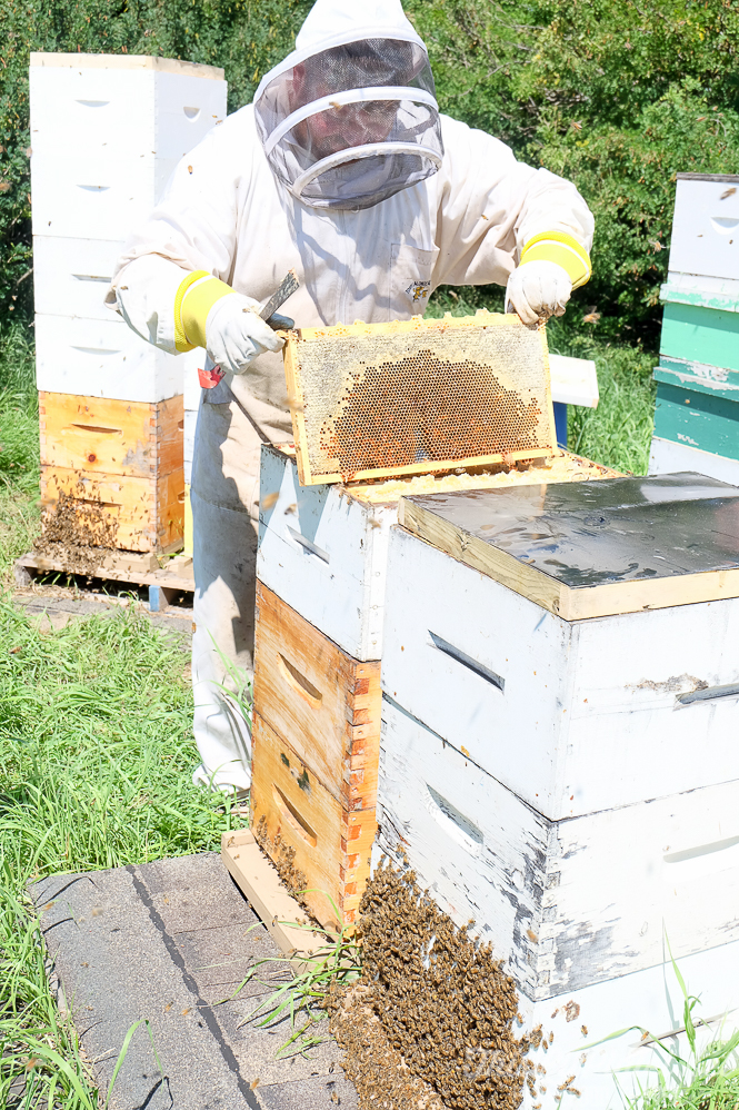 Beekeeper hard at work with the FUJIFILM X-A2 Digital Camera