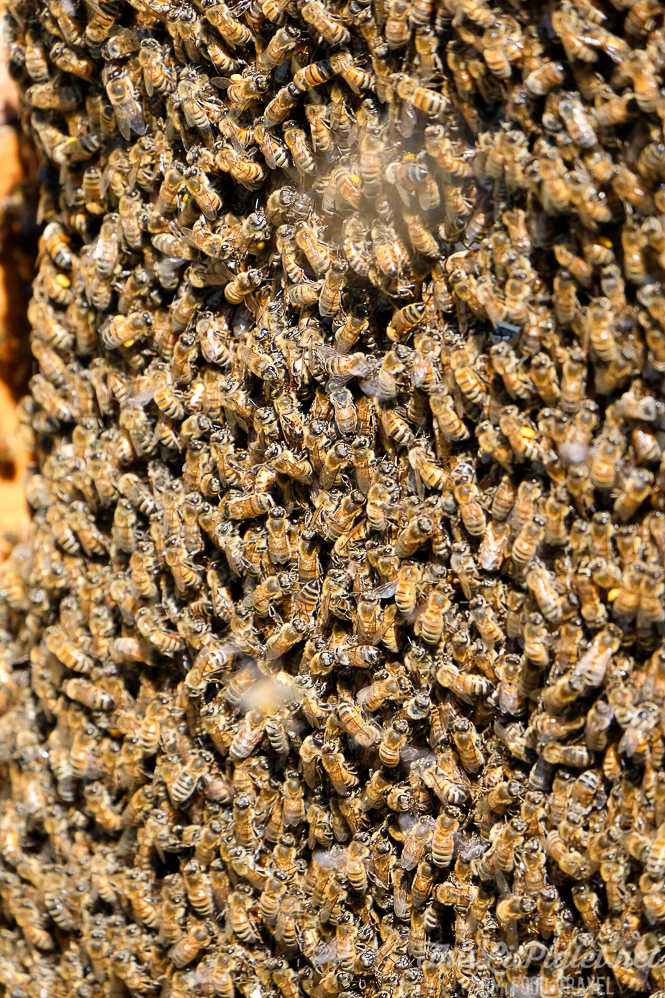 Beehive closeup FujiFilm XC50-230mm Lens Review