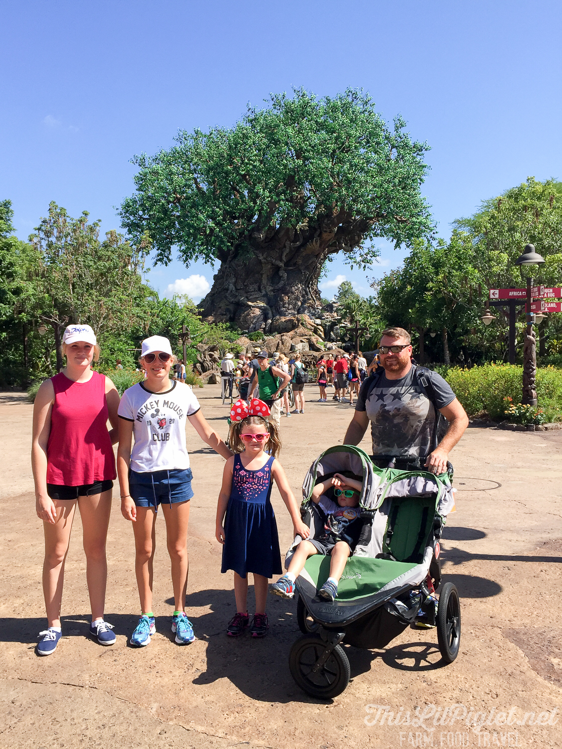 Walt Disney World Disney's Animal Kingdom Tree of Life // thislilpiglet.net