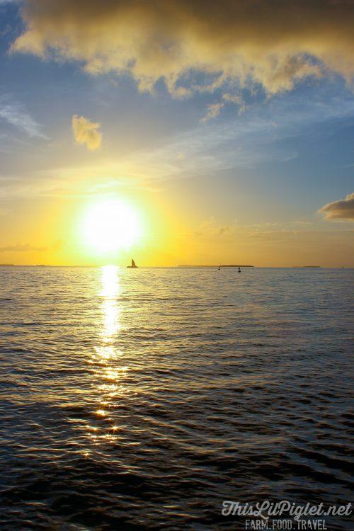 Key West Florida: What to Do - Mallory Square Sunset Celebration // thislilpiglet.net
