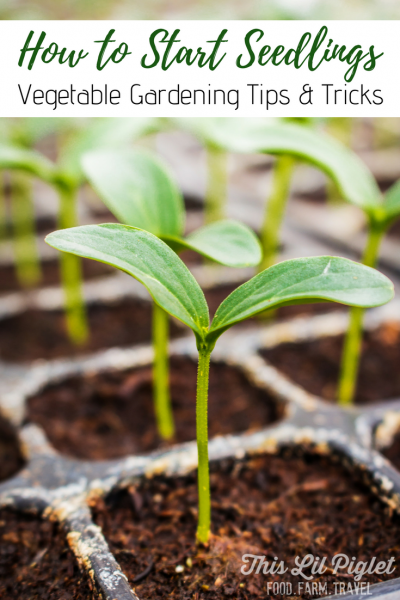 How to Start Seedlings Vegetable Garden Tips and Tricks